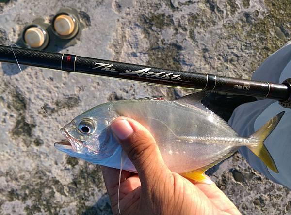 20150812魚5.jpg