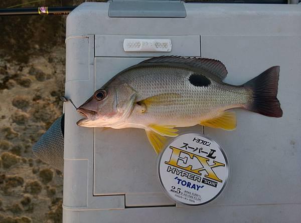 20151119魚2.jpg