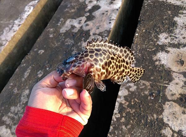 20151119魚3.jpg