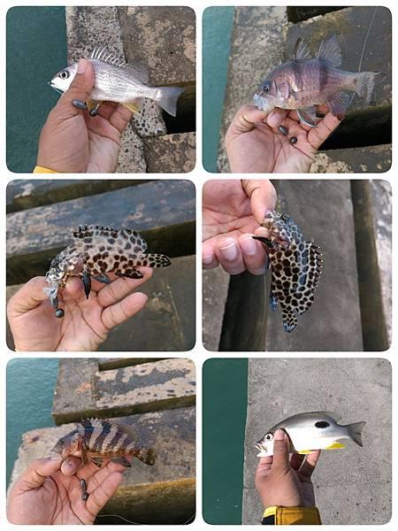 20151201魚1.jpg