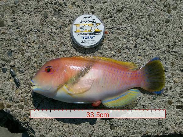 20151201魚7.jpg