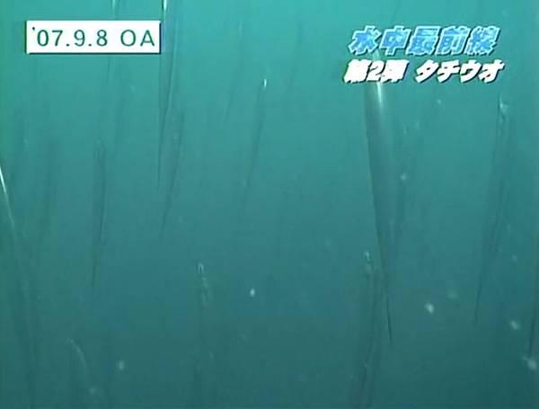 白帶魚泳姿001