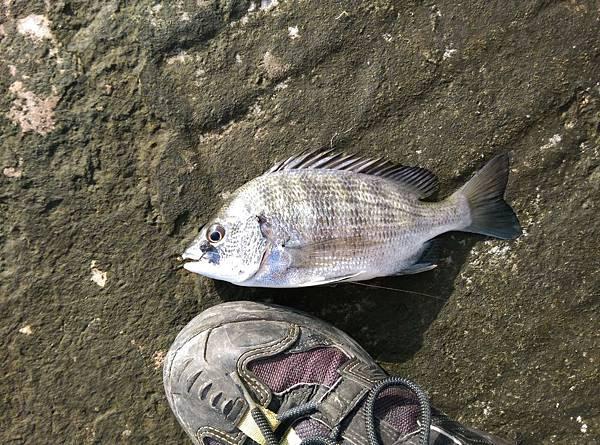 20160523魚5