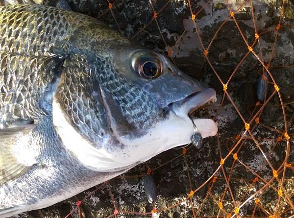 20160523魚1