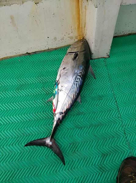 20170207魚5