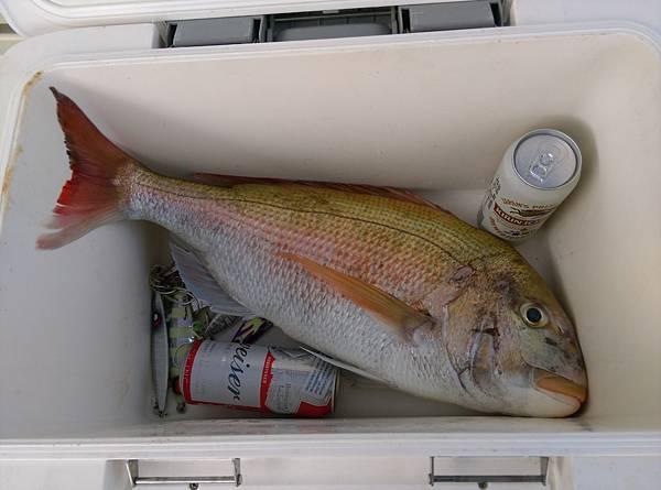 20170207魚4