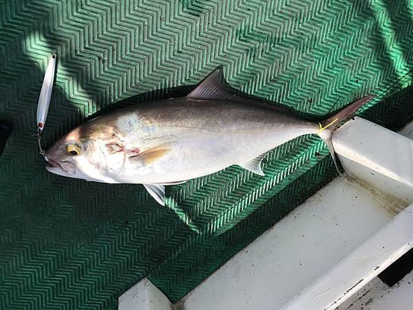 0409魚2