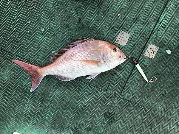 0409魚5