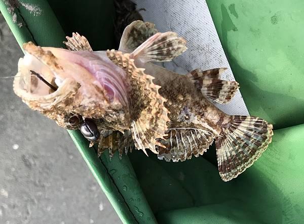 0403魚3