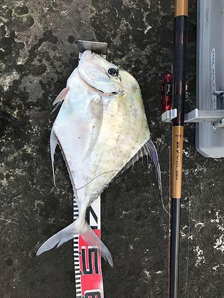 0403魚5