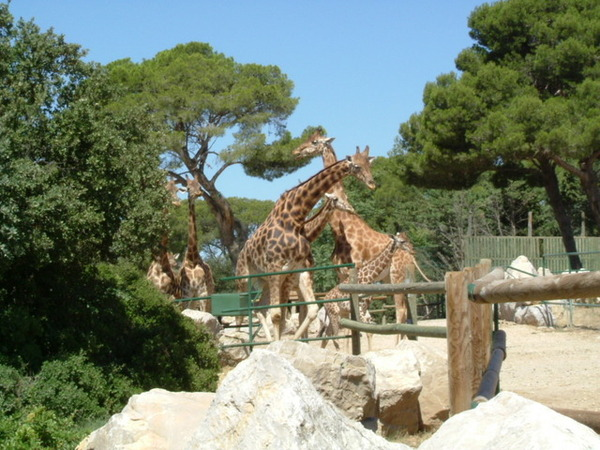 Zoo de la Barben