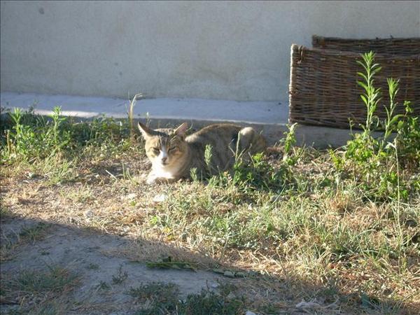 chat de Gilles