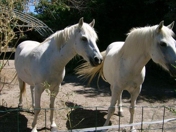 chevaux devant chez Jocelyne