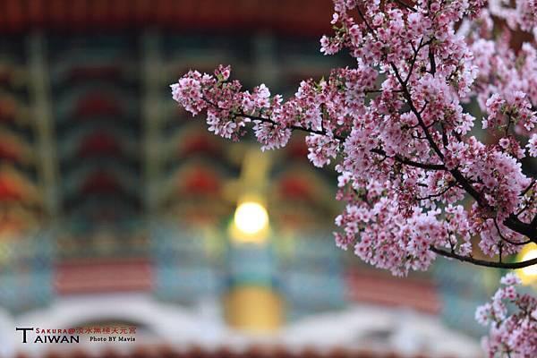 Sakura_0017.JPG