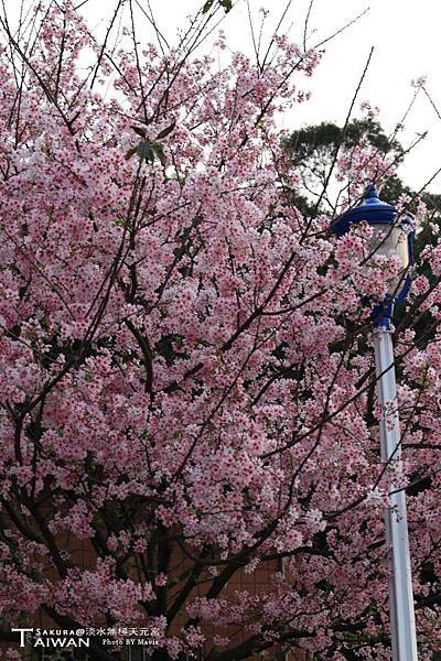 Sakura(s)_0005.JPG