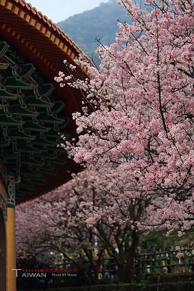 Sakura(s)_0009.JPG