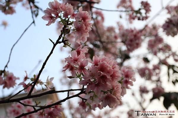 Sakura_0001.JPG