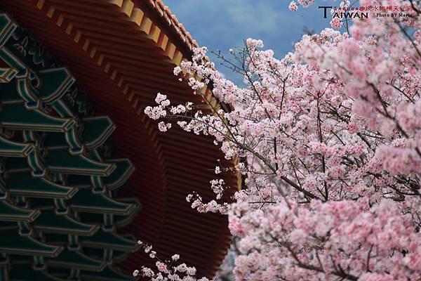 Sakura_0009.JPG