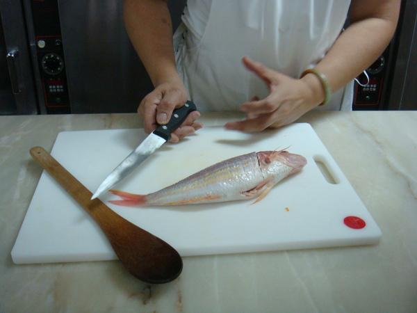要開始片金線魚