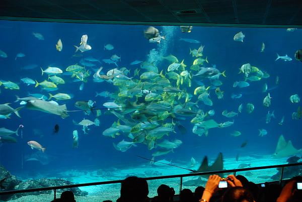 大洋池餵魚秀