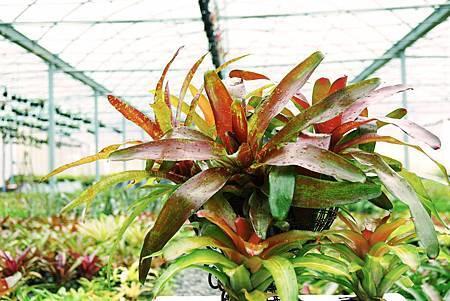 bromeliads.jpg