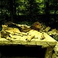 韓國愛寶野生動物園