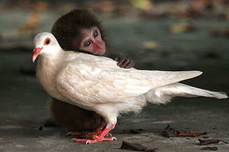 Baby%20monkey%20with%20pigeon%20mom.jpg