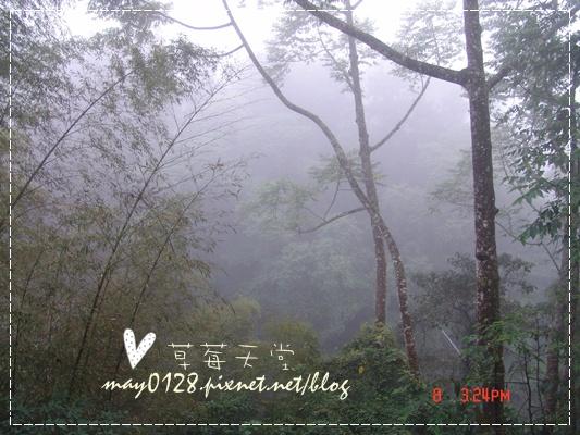 2010.01.08-5溪頭新明山.JPG