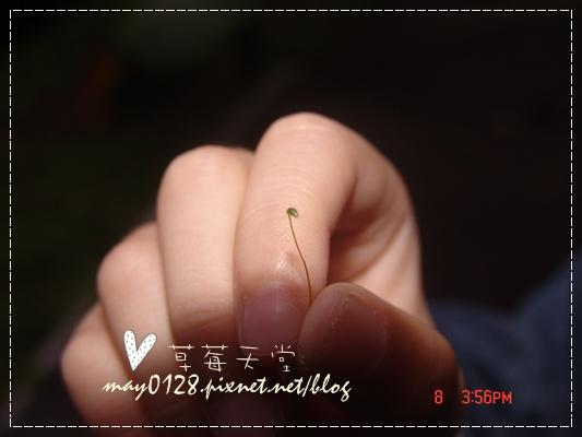2010.01.08-32溪頭新明山.JPG