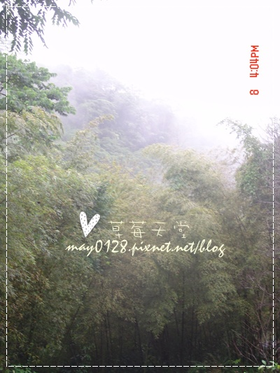 2010.01.08-48溪頭新明山.jpg