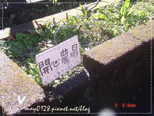 2010.01.09-3溪頭森林遊樂區.JPG