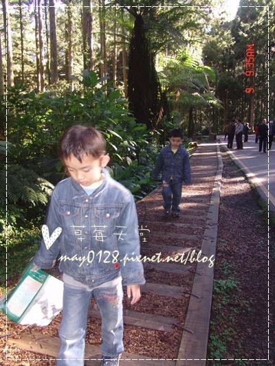 2010.01.09-13溪頭森林遊樂區.jpg