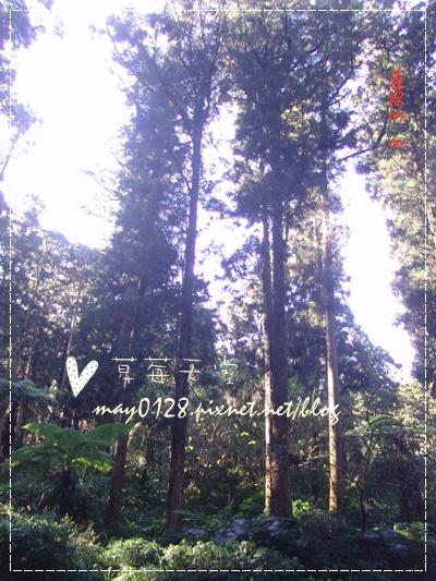 2010.01.09-14溪頭森林遊樂區.jpg