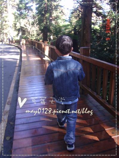 2010.01.09-17溪頭森林遊樂區.jpg