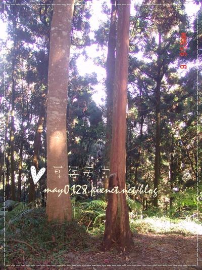 2010.01.09-31溪頭森林遊樂區.jpg