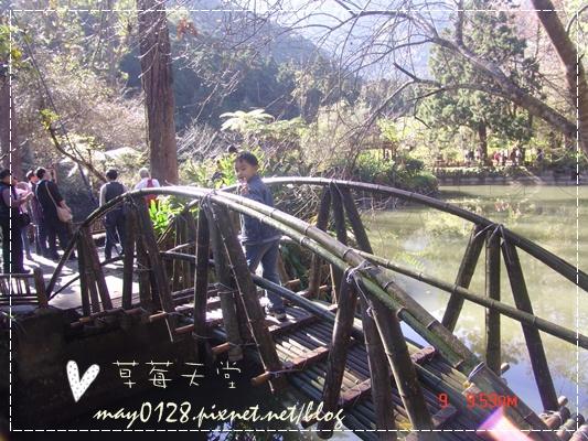 2010.01.09-39溪頭森林遊樂區.JPG