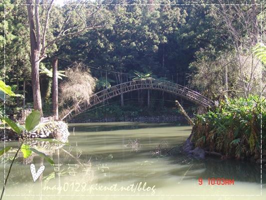 2010.01.09-47溪頭森林遊樂區.JPG