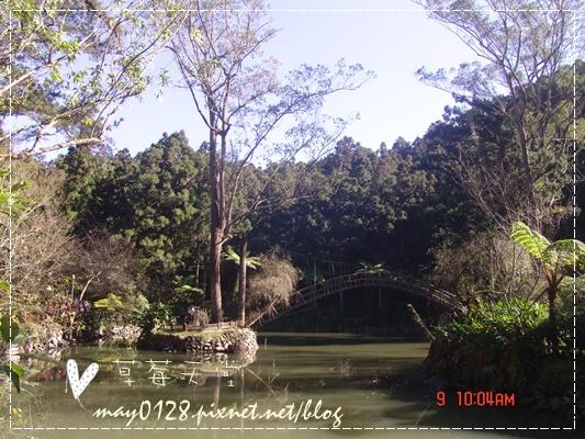 2010.01.09-48溪頭森林遊樂區.JPG