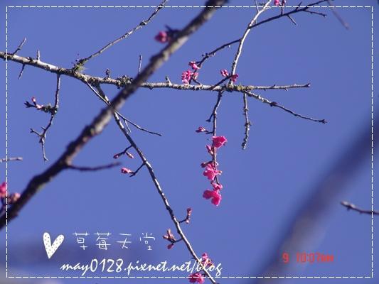 2010.01.09-53溪頭森林遊樂區.JPG