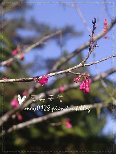 2010.01.09-54溪頭森林遊樂區.jpg