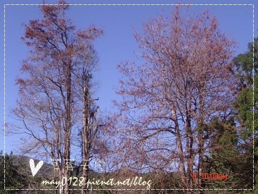 2010.01.09-55溪頭森林遊樂區.JPG