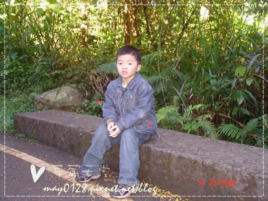 2010.01.09-61溪頭森林遊樂區.JPG