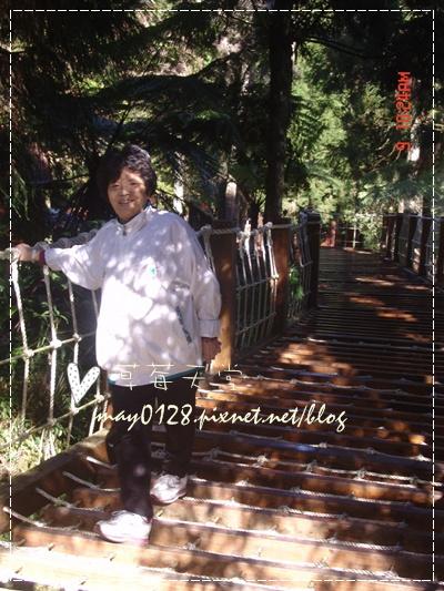 2010.01.09-67溪頭森林遊樂區.jpg