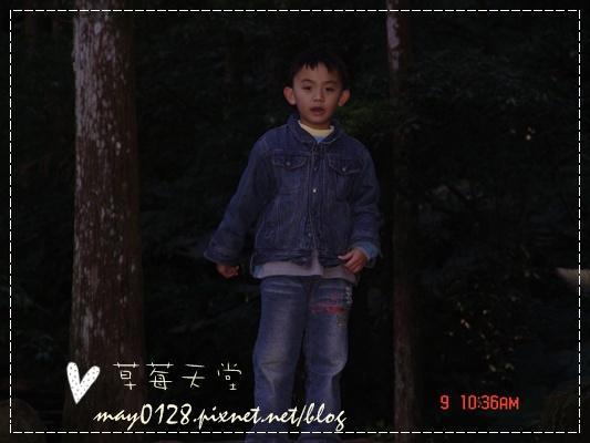 2010.01.09-70溪頭森林遊樂區.JPG