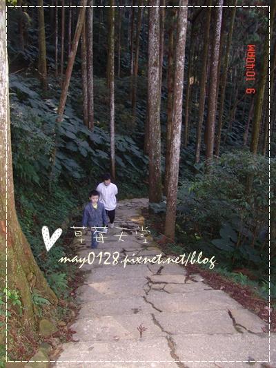 2010.01.09-74溪頭森林遊樂區.jpg