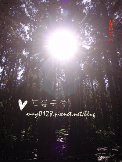 2010.01.09-83溪頭森林遊樂區.jpg