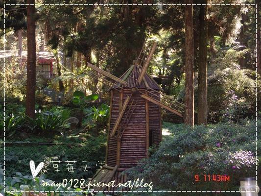 2010.01.09-87溪頭森林遊樂區.JPG