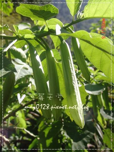 2010.01.09-95溪頭森林遊樂區.jpg