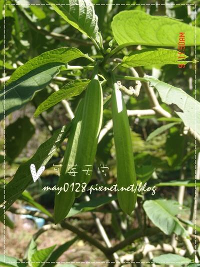 2010.01.09-96溪頭森林遊樂區.jpg