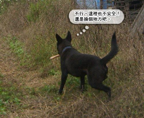 偷梳子連拍_09